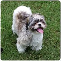 Adopt A Pet :: Fluffy - San Antonio, TX