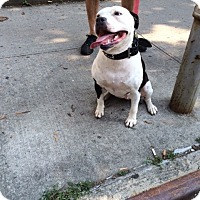 Adopt A Pet :: Holly - Long Beach, NY