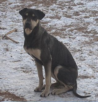 Hound (Unknown Type) Mix Dog for adoption in Santa Fe, New Mexico - Bayou
