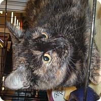 Adopt A Pet :: Naomi - Avon, OH
