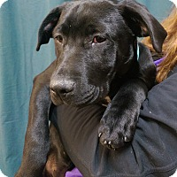 Adopt A Pet :: Paisley - Ogden, UT