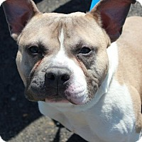 Adopt A Pet :: SPUNKY - Clayton, NJ