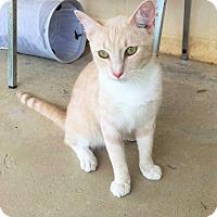 Adopt A Pet :: Charlie - Umatilla, FL