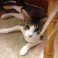 Adopt A Pet :: Bello - Beeville, TX