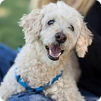 Adopt A Pet :: Skippy - Tucson, AZ