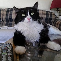 Adopt A Pet :: Chubs - Lancaster, CA