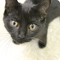 Adopt A Pet :: Jacob - Medina, OH