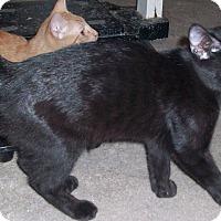 Adopt A Pet :: Bobby - Morriston, FL