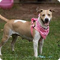 Adopt A Pet :: Calla - Ashland, WI