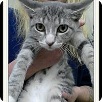 Adopt A Pet :: Tilly - Trevose, PA