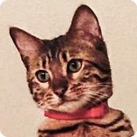 Adopt A Pet :: Ace - Davis, CA
