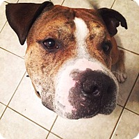 Adopt A Pet :: Jake - Edmonton, AB