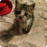 Adopt A Pet :: AVA - Hampton, VA