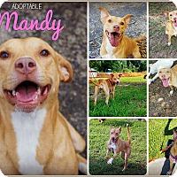 Adopt A Pet :: Mandy - Orlando, FL