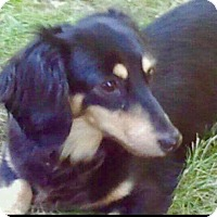 Adopt A Pet :: Gina - Nanuet, NY