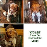 Adopt A Pet :: KAYLEE - Findlay, OH