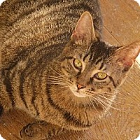 Adopt A Pet :: Mario - Richmond, VA