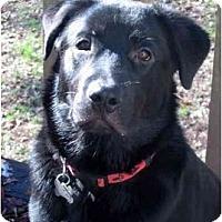 Adopt A Pet :: Cruz - Cumming, GA