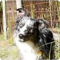 Adopt A Pet :: Scout - Orlando, FL