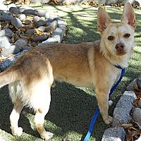 Adopt A Pet :: Roo - San Francisco, CA