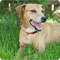 Adopt A Pet :: Honey - Xenia, OH