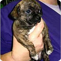 Adopt A Pet :: Mavis - Kingwood, TX
