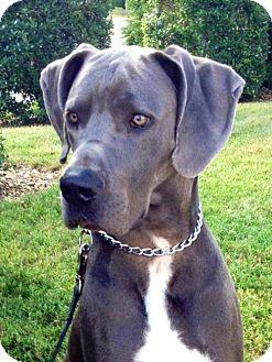 Dog Rescue Franklin Tn