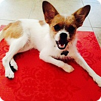 Adopt A Pet :: Eli - Las Vegas, NV