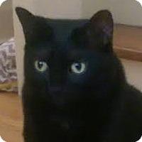 Adopt A Pet :: Toulouse - Toronto, ON
