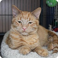 Adopt A Pet :: Flax - Hamilton, ON
