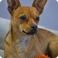 Adopt A Pet :: Peka - Phelan, CA