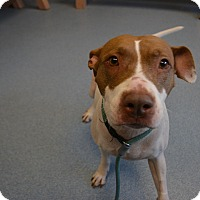 Adopt A Pet :: Cali - Bay Shore, NY