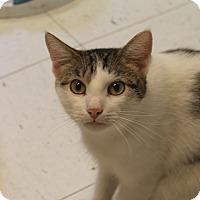 Adopt A Pet :: Junior - Pittsburg, KS