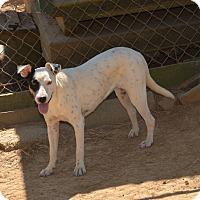 Adopt A Pet :: Hope - Charlemont, MA