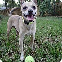 Adopt A Pet :: Tank - Gainesville, FL