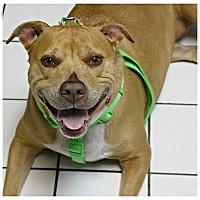 Adopt A Pet :: Nina - Forked River, NJ
