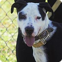 Adopt A Pet :: Destiny - Choudrant, LA