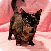 Domestic Shorthair Cat for adoption in Port Clinton, Ohio - Billie