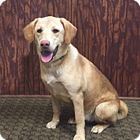 Adopt A Pet :: Cricket - Lewisville, IN
