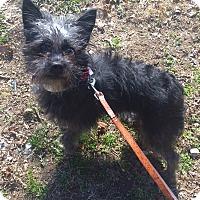 Adopt A Pet :: Vivian & Vane - Oak Ridge, NJ