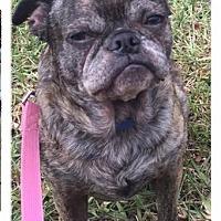 Adopt A Pet :: Taz - Fort Lauderdale, FL