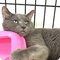 Adopt A Pet :: Mystikal - New York, NY