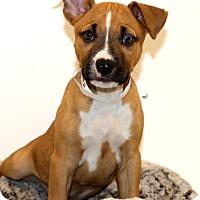 Adopt A Pet :: Sweet Annie~adopted! - Glastonbury, CT