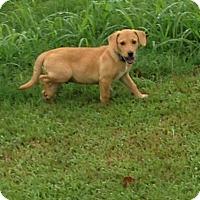 Adopt A Pet :: Teddy meet me 9/9 - Manchester, CT