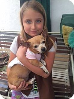 Chihuahua Dog for adoption in Pacific Palisades, California - LOLA