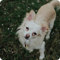 Adopt A Pet :: Tracker - Norman, OK