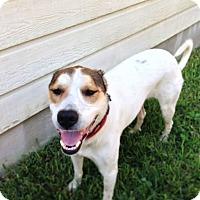 Adopt A Pet :: Carlie - Austin, TX