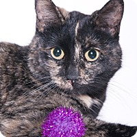 Adopt A Pet :: Wilma - Chicago, IL