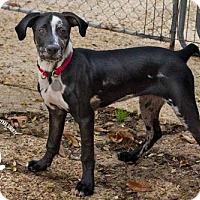 Adopt A Pet :: Harley - Baton Rouge, LA