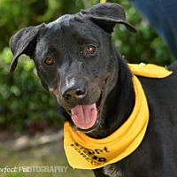 Adopt A Pet :: Thomas - Miami, FL